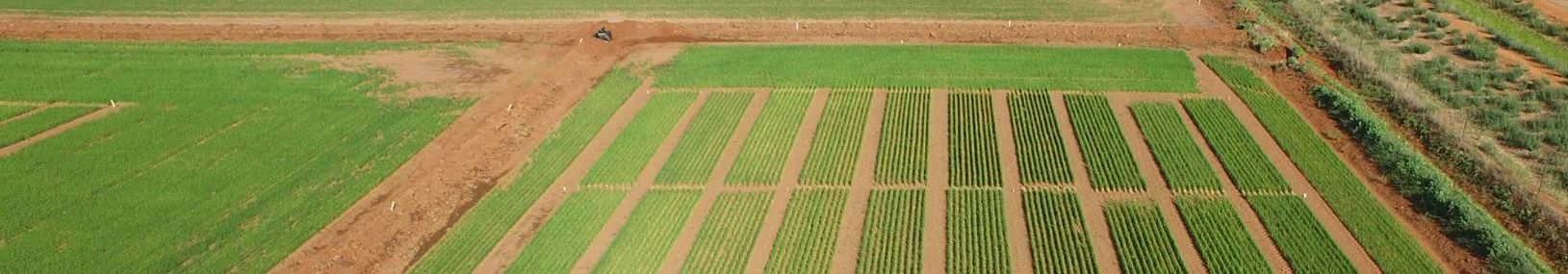 Dunn Crop trials