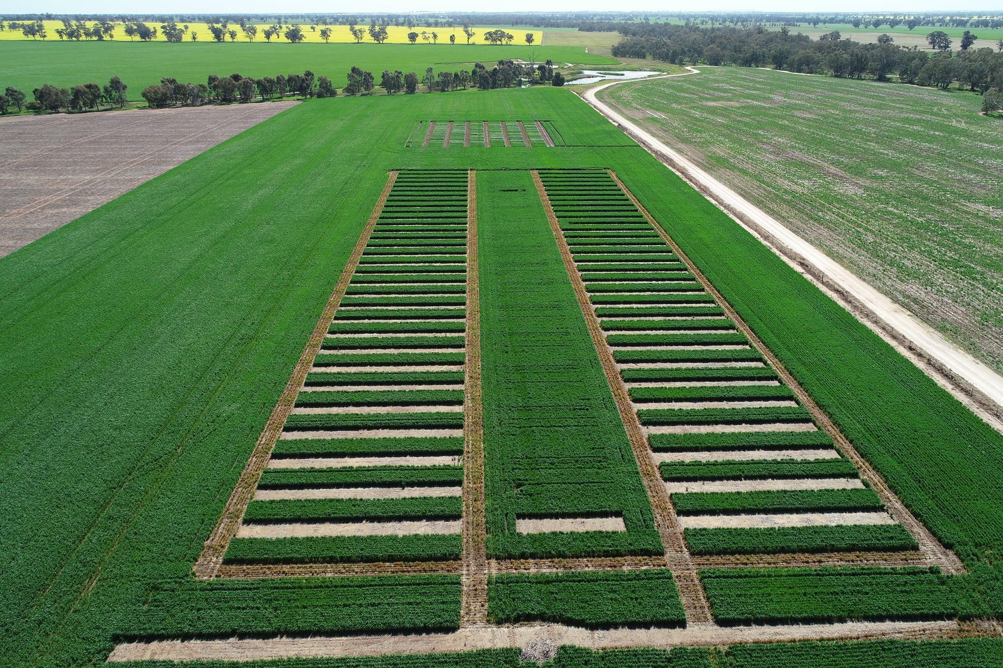 Grid crop