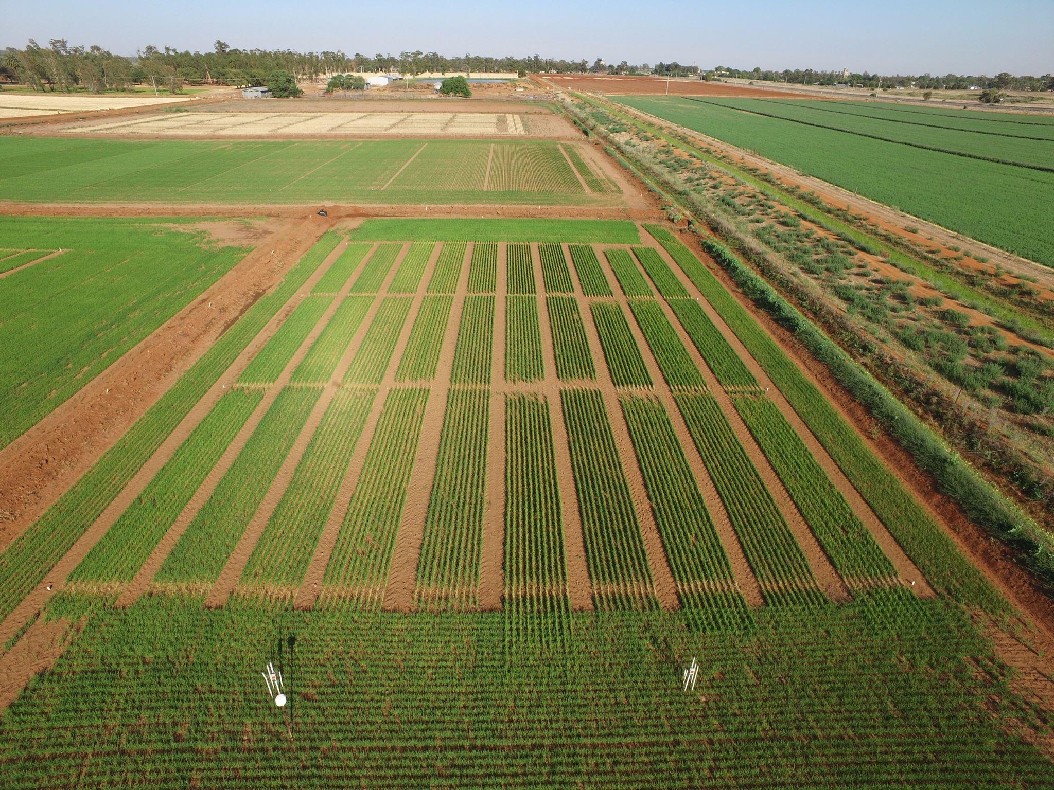 Crop trial